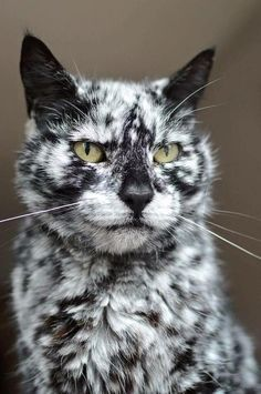Interesting markings!