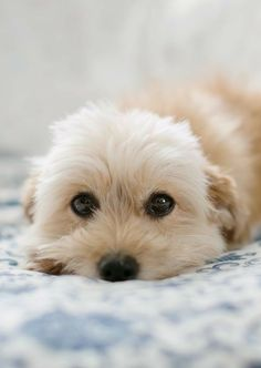 Love my little dogs baby animals, animals and pets, funny animals, cute . Cute Animals Puppies, Baby Puppies, Baby Dogs, Cute Baby Animals, Animals And Pets, Dogs And Puppies, Funny Animals, Cute Animal Videos, Cute Animal Pictures