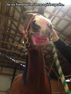 Bitch Im Fabulous with Pink Lips! Horse Eats a Pink Cupcake... Makeup Fail ---- best hilarious jokes funny pictures walmart humor fail