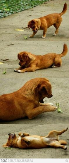 Puppy and Praying Mantis! Reminded me of someone...