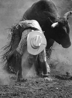 ♪ It's the bulls and the mud ♪