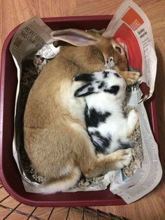 So anyone else mistake that brown rabbit for a cat at first? Funny Rabbit, Funny Bunnies, Baby Bunnies, Cute Bunny, Animals And Pets, Baby Animals, Cute Animals, Young Rabbit, Bunny Care
