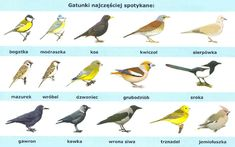 most common birds encountered in Poland Fat Bird, Common Birds, Clematis, Bird Art, Reggae, Poland, Garden, Life, Animals