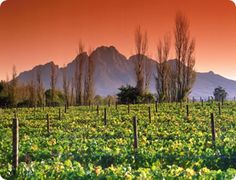 Sunset over Franschhoek, in South Africa living a Travelife. Travelife Magazine's Suitcase Tales. www.travelifemagazine.com