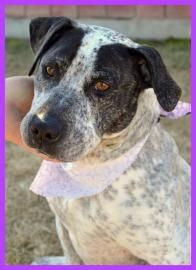 Roseanne - canyon county animal shelter