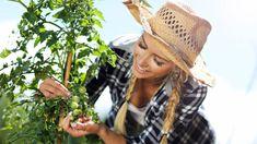 Citronträd – så odlar du citron hemma | Mitt kök Hats, Fashion, Moda, Hat, La Mode, Fasion, Fashion Models, Trendy Fashion