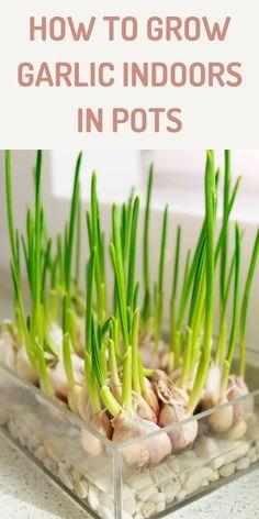Indoor Vegetable Gardening, Home Vegetable Garden, Small Space Gardening, Garden Pots, Container Gardening, Garden Ideas, Garden Projects, Garden Inspiration, Veggie Gardens