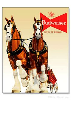 Budweiser Clydesdale Team Sign