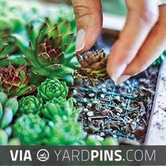 So neat! - Make your own living succulent art | Plant cuttings | http://Sunset.com | Check out these other sweet photos of popular succulents at yardpins.com | #succulents #cactus #sedum #gardens #gardening #botany #horticulture #flowers #trees #plants