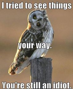 Discover and share Quotes Funny Owl. Explore our collection of motivational and famous quotes by authors you know and love. Funny Owls, Funny Cute, The Funny, Funny Animals, Adorable Animals, Cat Memes, Funny Memes, Memes Humor, Funny Videos