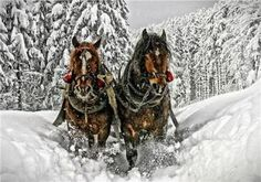 Winter Horse Drawn Sleigh Ride ~ Counted Cross Stitch Pattern Chart