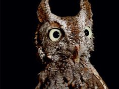 7 Extraordinary Animals Rarely Seen by Human Eyes  Read more: http://www.rd.com/slideshows/nocturnal-animals/#ixzz3GRNC0ivh