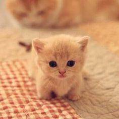 Mini chaton super mignon !