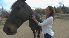 L'équithérapie, ou la thérapie par le contact avec des chevaux, gagne en popularité au Nouveau-Brunswick. Depuis 2014, c'est l'avenue qu'Angela Gevaudan a choisie pour passer au travers de la tragédie qui a coûté la vie à son mari, l'agent de la GRC Fabrice Gevaudan, l'une des victimes de la fusillade de Moncton en 2014.
