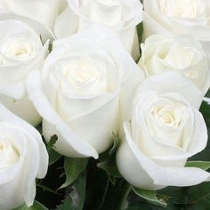 There is something beautifully innocent about elegant white Roses!