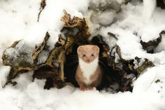 The British Wildlife Photography Awards Winners Are Here And They're Stunning