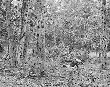 Damaged trees on Culp's Hill Battle of Gettysburg 1863