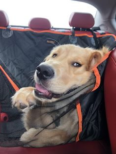 Road trips are ruff Funny Animal Pictures, Cute Funny Animals, Cute Baby Animals, Funny Dogs, Animals And Pets, Cute Puppies, Cute Dogs, Dogs And Puppies, Beautiful Dogs