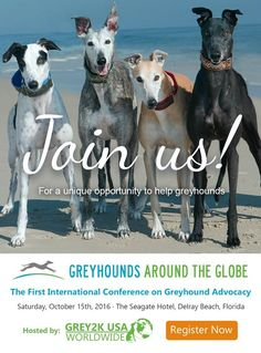 On October 15, key Florida lawmakers and animal advocates from around the globe will gather in #DelrayBeach, FL on behalf of Greyhounds. Workshops, talks and lunch during the day. Dinner will include the keynote address by Wayne Pacelle, CEO of The Humane Society of the United States. Hosted by #GREY2K USA, a #Greyhound protection group.