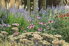 För att hjälpa alla som är gröna i trädgården att få en flygande start har perenner.se listat tjugo perenner som hör till de allra mest lättodlade i sol till halvskugga. De är härdiga, friska, långlivade och klarar sig utan stöd. Alltså utmärkta perenner för många sammanhang – och även för de mer erfarna! Anisisop 'Blue … Echinacea Purpurea Magnus, Bra Hacks, Flower Beds, Geraniums, Perennials, Flower Power, Garden Design, Bloom, Landscape