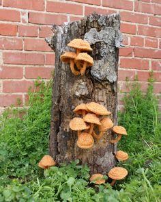 Photo de champignons tricotés - fibre Art