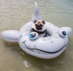 Pug in a shark tube Funny Pugs, Cute Pugs, Cute Funny Animals, Pugs And Kisses, Crazy Dog, Cute Animal Pictures, Pug Love, Animal Memes, Animals And Pets