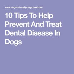 10 Tips To Help Prevent And Treat Dental Disease In Dogs
