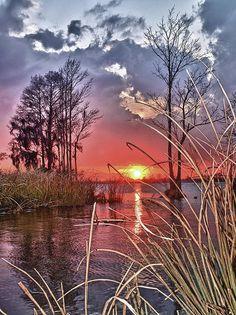 Winter sunset through the marsh grass