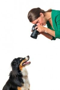 How to take better photos of your dog.