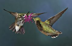 Best Bird Pictures: Air, Sea, Ice Shots Win New Contest