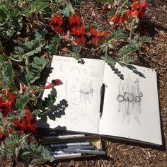 Drawing botanicals with Edith Rewa   Plant Life Balance