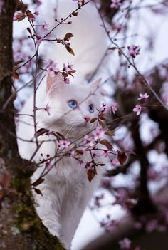 catch the bird by freizeit-otto Pretty Cats, Beautiful Cats, Pretty Kitty, Kittens And Puppies, Cats And Kittens, Cats Meowing, I Love Cats, Cool Cats, Cat With Blue Eyes
