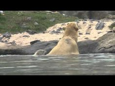 IJsbeertje Vicks gaat zwemmen met moeder Olinka