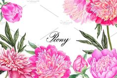Peonies by Watercolor life on @creativemarket