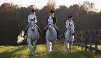 Fun Horse Activities for Kids | eHow.com