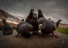 These pigeons looks like they are about to drop the hottest rock/rap album since Licensed to Ill