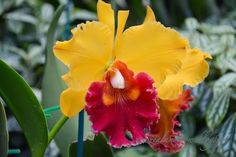 New Zealand WOW!: Yellow Reddish Orchid