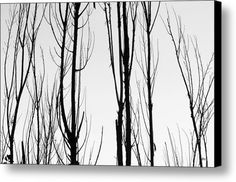 black and white trees graphic wallpaper | ... Related black and white tree branches abstract pictures Wallpaper