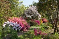 Comment créer son jardin à l'anglaise (fleurs sauvages, rose, bleu, violet, blanc, jaune)