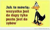 Stylowa kolekcja inspiracji z kategorii Humor Funny Memes, Jokes, Motto, Haha, Funny Pictures, Facts, Humor, Scary, Polish