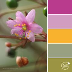 Tropical Femininity colour palette by Brand Smoothie