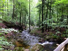 Ilsetal Harz Richtung Brocken by halleliebe, via Flickr