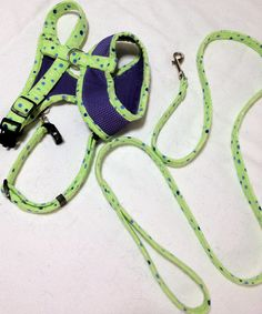 Dog accessories (harness, leash and collar).