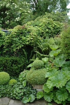 Green & leafy garden, simple foliage. Ideas for the front garden - need to find hardy evergreens that can look like this