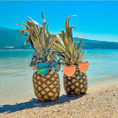 The pineapple are slaying it 😂😂 Pineapple Wallpaper, Pineapple Art, Summer Backgrounds, Wallpaper Backgrounds, Summer Pictures, Pretty Pictures, Pineapple Pictures, Arte Yin Yang, Best Beach In Florida