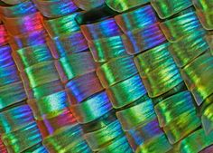 The wings of a moth magnified 25x.