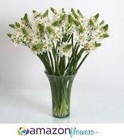 Amazonflowers.us | Wedding Flowers, Wholesale Flowers, Fresh Flowers and Bulk Flowers