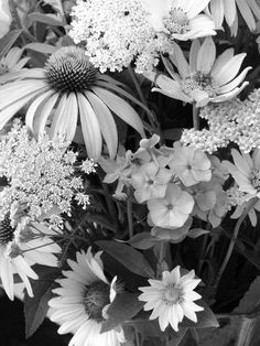 Black And White Photography Flowers - Bing Images