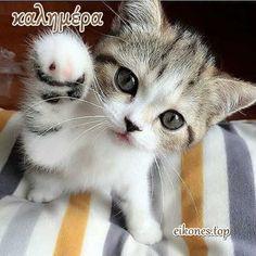 Cat memes memes · cats, funny, and lol: invizibul fist bump! Grumpy Cat Meme, Funny Cat Memes, Funny Cat Videos, Funny Cats, Ragdoll Kittens, Cute Kittens, Cats And Kittens, Bengal Cats, Kitty Cats
