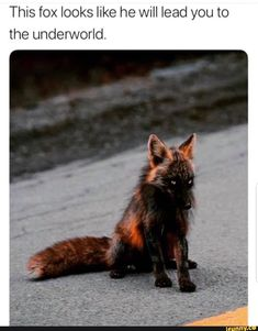He's a fox, a trixter. Chances are, he'll lead you to heaven just to spite you Funny Animal Jokes, Funny Animal Pictures, Cute Funny Animals, Animal Memes, Funny Cute, Cute Dogs, Fox Memes, Cat Memes Hilarious, Funny Captions